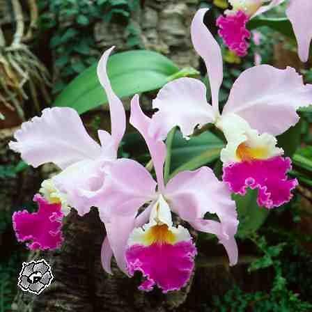 Цветы орхидея самые красивые