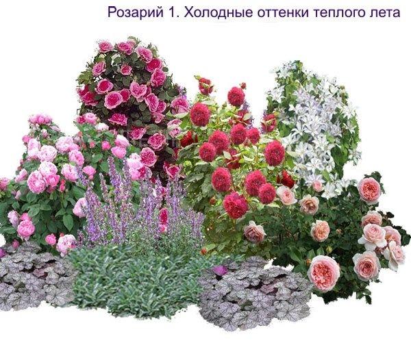 Розарий на даче фото и схемы