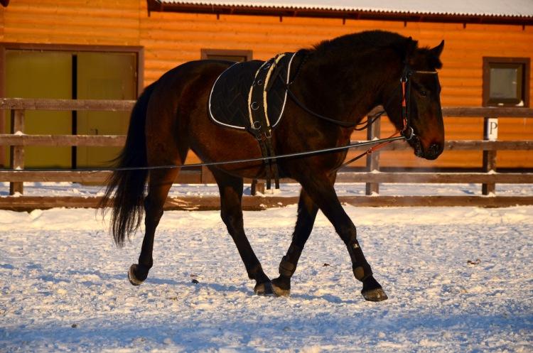 К чему сниться лошадь и кровь фото